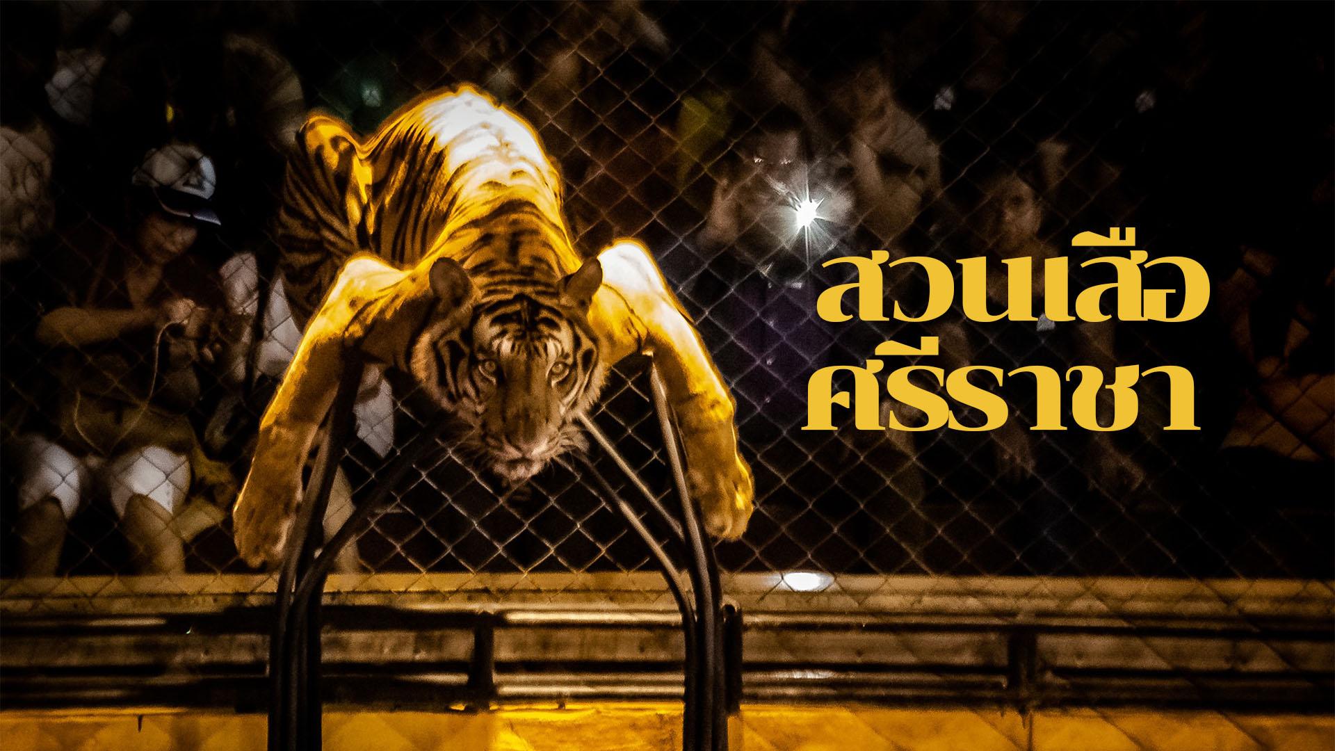 สวนเสือศรีราชา เป็นสถานที่ท่องเที่ยวที่น่าสนใจอีกแห่งของจังหวัดชลบุรี เพราะถึงแม้ว่า จะชื่อสวนเสือศรีราชา แต่ความจริงแล้วไม่ได้มีแค่เสือ แต่ยังมีจระเข้ และสัตว์อื่น ๆ อีกมากมายหลายชนิดเหมือนสวนสัตว์ทั่วไป